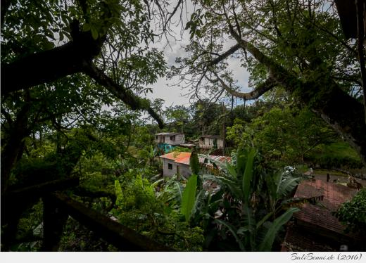 Ausblick von einem Baumhaus im Inselinneren